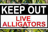 Alligators danger signal — Stock Photo