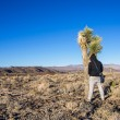 Stock Photo: Mpissing on cactus