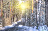 Suggestive view of forest in winter — Stock Photo