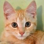 Look of a kitten — Stock Photo #48427335