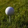 Stock Photo: Golfball on Tee