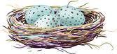 Bird's nest with robin eggs — Stock Vector