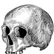 Engraved human skull — Stock Vector