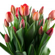 A large bouquet of red tulips on white background — Stock Photo #42459367
