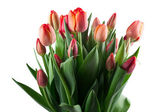 A large bouquet of red tulips on white background — Stock Photo