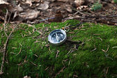 Compass on a mossy log in a forest — Stock Photo