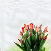 A large bouquet of red tulips on white paper texture — Foto de Stock