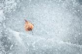 Frozen into ice birch leaf — Stock Photo