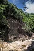 Gelen orman içinde — Stok fotoğraf