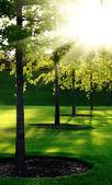 Aleja w parku — Zdjęcie stockowe