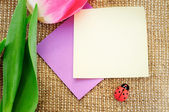 Greeting card decorated with tulips and ladybug — Stock Photo