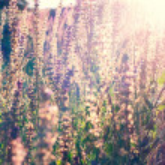 Vintage Flowers background — Stock Photo #40720057
