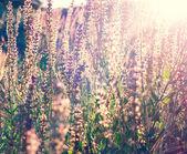 Vintage blommor bakgrund — Stockfoto
