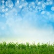 Green gras  abstract summer backgrounds with beauty bokeh — Stock Photo #42807505