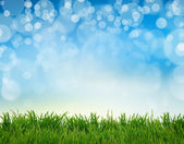 Green gras  abstract summer backgrounds with beauty bokeh — Stock Photo