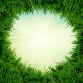 Grama verde, isolada no fundo branco — Fotografia Stock