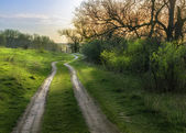road through fields with green grass and blue sky with clouds,  — Foto Stock