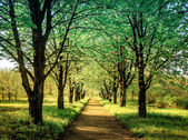 Beautiful tree alley in the park, natural background — Stock Photo