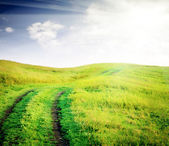 Empty  road through fields with green grass and blue sky with cl — ストック写真