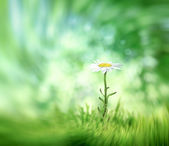 Abstract summer natural background with camomile and place for y — Stock Photo