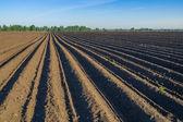 Bramborová pole na jaře — Stock fotografie