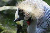 Oiseau — Photo