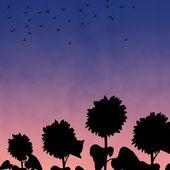 Sunflowers on sunset background — Stock Photo