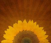 Tło grunge słonecznika — Zdjęcie stockowe