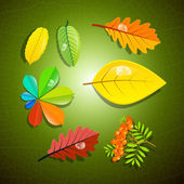 Colorful Leaves and Rowan Berry on Green Background — Stock Vector