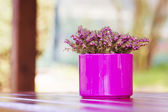 Purple - Pink Flowerpot with Violet Flower on Table — Stock Photo