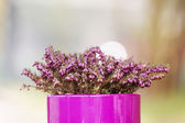 Purple - Pink Flowerpot with Violet Flower on Blurred Background — Stock Photo