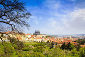 Spring Prague Castle Photo - The Cathedral of St Vitus - Czech Republic - Europe — Stockfoto