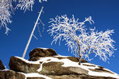 Winter Scene - Frozen Tree on the Top pf Mountain - Rock  — Stock Photo