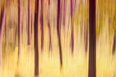 Abstract Forest Blurred Background Photo  — Foto de Stock