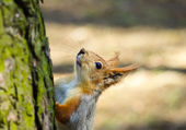 Squirrel on the tree. — Stock Photo