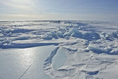 On the ice of the Arctic Ocean. — Stock Photo