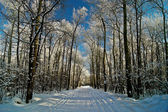 Winter forest covered with frost. — Stock Photo