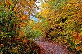 Las hojas de otoño en un camino. — Foto de Stock