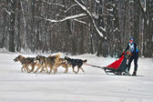 Dogsled - vintage trucks northern Aborigina. — 图库照片