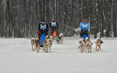 Dogsled - vintage trucks northern Aboriginal now becomes the spo — Stock Photo