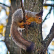 Squirrel on a tree branch. — Stock Photo
