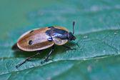 Orman böceği. — Stok fotoğraf