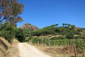 Paesaggio toscano, isola d'elba, italia — Foto Stock