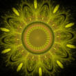 Shining Flower — Stockfoto