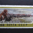 SOVIET UNION - CIRCA 1966: A stamp printed in former SOVIET UNION shows Northern Fur Seals in Bering Island, circa 1966. — Stock Photo #35433853