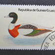 EQUATORIAL GUINEA - CIRCA 1976: Stamp printed in EQUATORIAL GUINEA shows a Common Shelduck (Tadorna tadorna), circa 1976 — Stock Photo