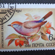 SOVIET UNION - CIRC1981: stamp printed in former SOVIET UNION shows songbird Severtzov's Tit Warbler, circ1981. — Stock Photo #35433993