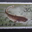 Stock Photo: NORTH KORE(KOREAN PEOPLE'S DEMOCRATIC REPUBLIC) - CIRC1975: stamp printed in NORTH KOREshows Amur Catfish (Silurus asotus), circ1975.
