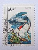 GUINEA BISSAU - CIRCA 1985: Stamp printed in GUINEA BISSAU commemorates birth bicentenary of ornithologist John J. Audubon and it shows Great Blue Heron, circa 1985 — Foto de Stock