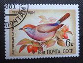 SOVIET UNION - CIRCA 1981: A stamp printed in former SOVIET UNION shows a songbird Severtzov's Tit Warbler, circa 1981. — Stock Photo